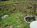FAI HOR Fla BotanicalGarden IndeginousCald.jpg