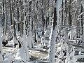 FL Swamp covered in Snow (5304111180).jpg