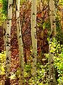 Fall Leaves (19952432476).jpg