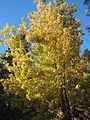 Fall Trees (2971495675).jpg