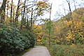 FallingWaters fall colors - panoramio (11).jpg