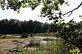 Feuchtgebiet Quarmbach 7940.jpg