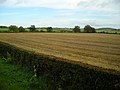 Field and Trees - geograph.org.uk - 564759.jpg