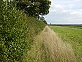 Field margin adjacent to the A166 - geograph.org.uk - 252545.jpg