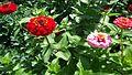 Fleur39.jpg