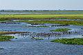 Flooded grassland La sabana inundada.jpg