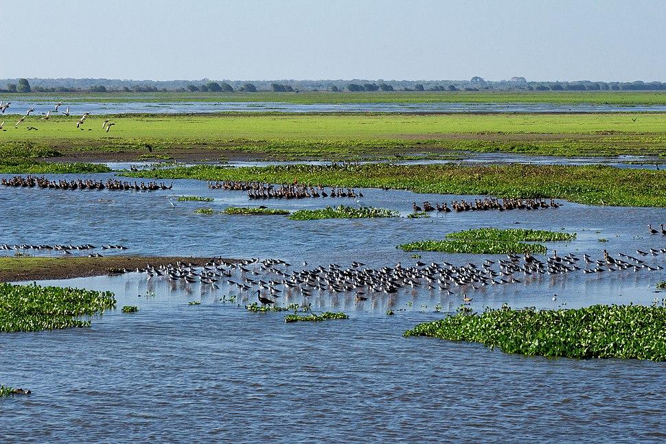 Flooded grassland La sabana inundada