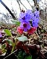 Flora 17 Slovakia1.jpg