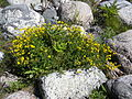 Flora on island Kylmapihlaja.jpg
