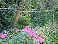 Flores - panoramio - Paulo Humberto.jpg