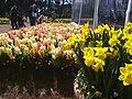Floriade canberra06.jpg