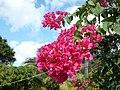 Flower - panoramio - georama (4).jpg