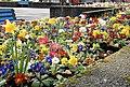 Flower bed, Belfast - geograph.org.uk - 702562.jpg