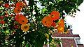 Flowers en La Soledad.jpg