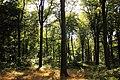 Forêt de Stambruges 18.jpg