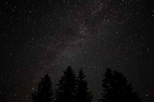 Forest-night-sky-spruce-trees-stars - West Virginia - ForestWander