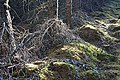 Forest Floor - geograph.org.uk - 290303.jpg