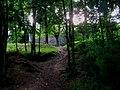 Forest Vinoř.jpg