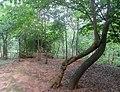 Forest at Kambalakonda in Visakhapatnam 01.JPG