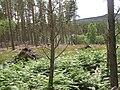 Forestry, Strath Brora - geograph.org.uk - 854745.jpg