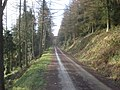 Forestry track in Cwm Broadwell Wood - geograph.org.uk - 684585.jpg