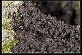 Formicidae (15015267981).jpg