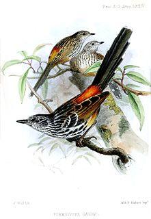 1854 in birding and ornithology