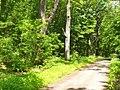 Forst Potsdam (Potsdam Forest) - geo.hlipp.de - 37829.jpg