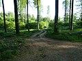 Forstweg beim Fuchsbauweg - geo.hlipp.de - 18993.jpg