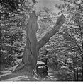 Fotothek df ps 0001830 Bäume.jpg