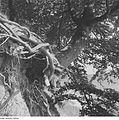 Fotothek df ps 0002136 Bäume ^ Landschaften ^ Insellandschaften.jpg