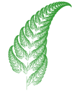 Fractal fern created using chaos game, through an Iterated function system (IFS).