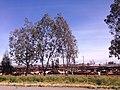 Fresno, CA, USA - panoramio (64).jpg