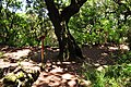 From Rabacal to Levada do Risco ^ Levada 25 Fontes, Madeira, Portugal, June-July 2011 - panoramio (3).jpg