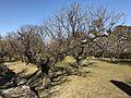 Furuno Plum Garden in Shimabara Castle.jpg