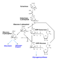 Galactose catabolism.png