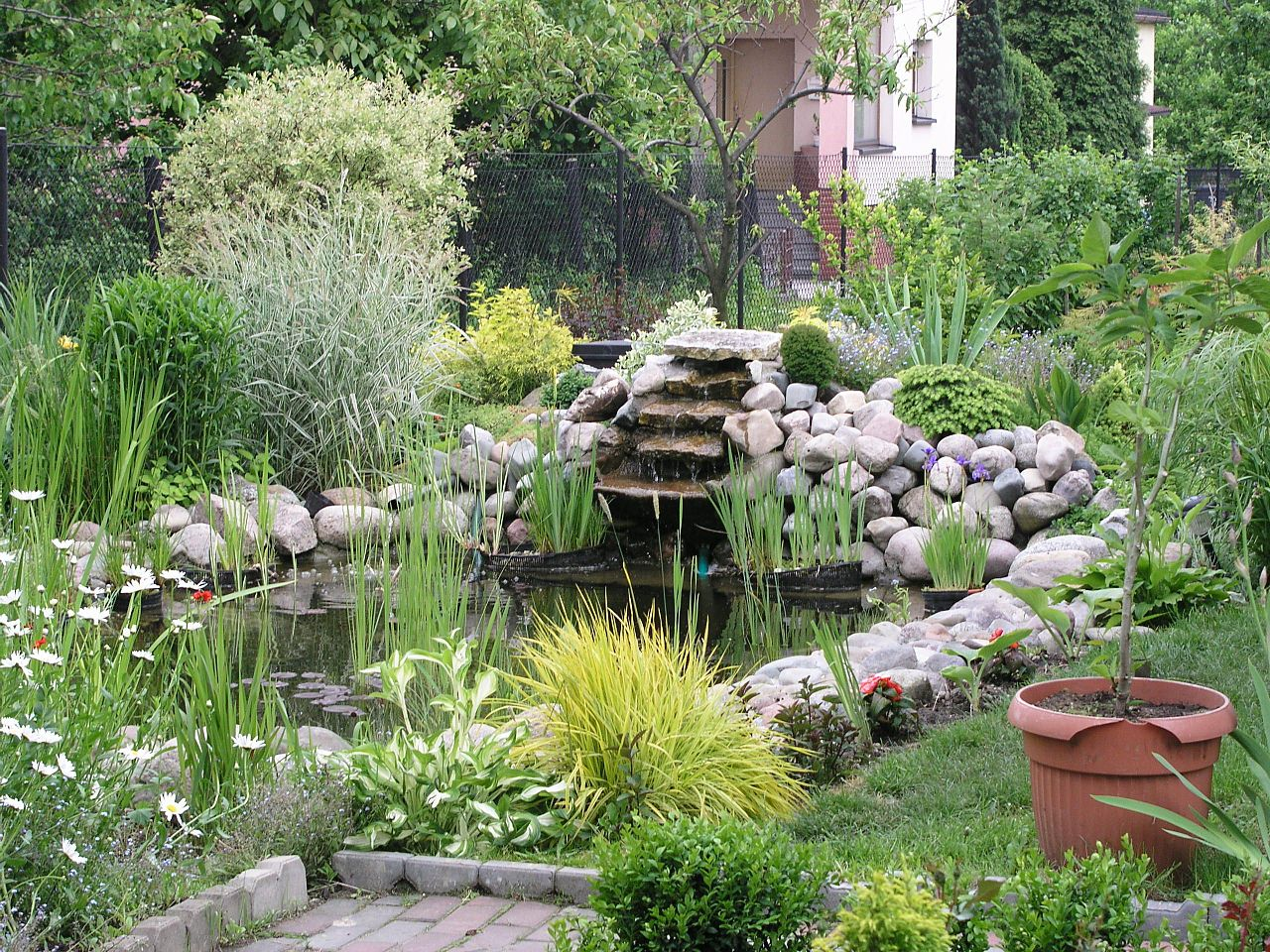 File garden pond wikimedia commons for Garden pool dimensions