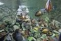 Gaziantep Zoo 2222.jpg
