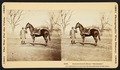 General grants horse cincinnati.tif