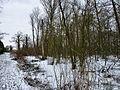 Gentbos 5 feb 2012 - de grens tussen ophopend moeras en pad vervaagt.jpg