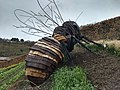 Giant Bee with no fur @ Eden Project.jpg