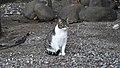 Gibraltar Cat (30DEC17) (4).jpg