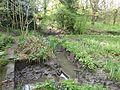Glamis Meadow and Wood 5.jpg