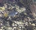 Glover's Reef 2-14 (32271486644).jpg