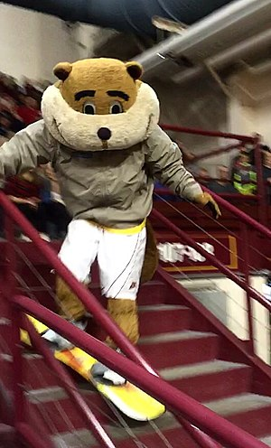 Goldy Gopher - Goldy Gopher snowboarding down a staircase at a women's volleyball game