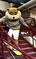 Goldy Gopher Volleyball.jpg