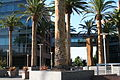 Google campus mountain view palm trees.JPG