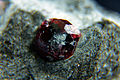 Granat (garnet), almandyn - Bella Vista Mine, Mitkof Island, Wrangell-Petersburg borough, Alaska, USA..JPG