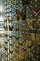 Grande Galerie de l'Évolution (24085966150).jpg