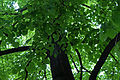 Green (4621985937).jpg